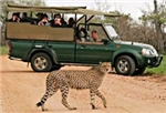 Kruger Wildlife Experience Mid-Range Safari Option