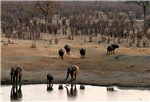 Hwange National Park, elephants and buffalo