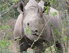 Rhino in Hwange National Park