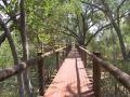 Tree top boardwalk