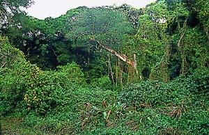 Maphelane Kzn Wildlife National Park Reserve Self