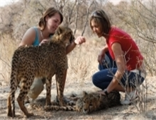 Interact with cheetah