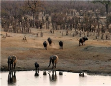 Hwange National Park-Bufallo and Elephants