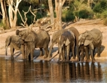 chobe national park wildlife