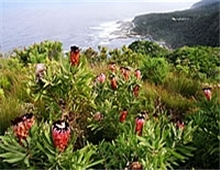 4 Days Guided Tour of the Garden Route