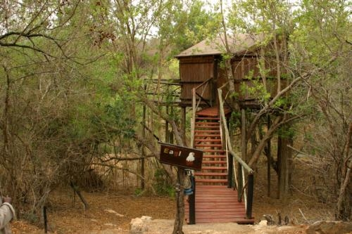 Marcs Eagle Treehouse - Copyright Viva Safaris