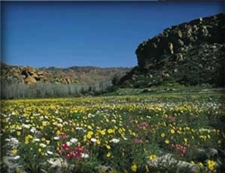 Scenes in Namaqua National Park