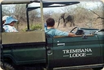 Safari in Kruger Park