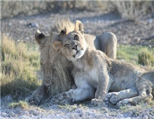 Etosha National Park - wildlife
