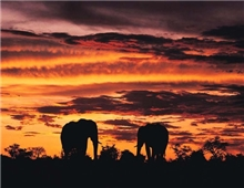 African Sunset in the Kruger Park