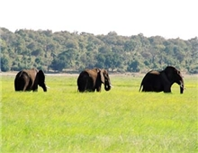Chobe National Park, elephants