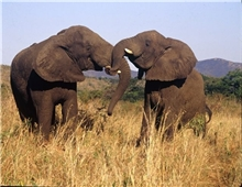 elephant wildlife at Nambiti Private Game Reserve